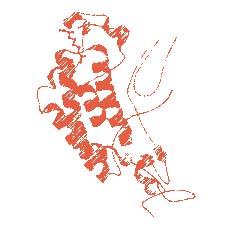 Custom Peptides